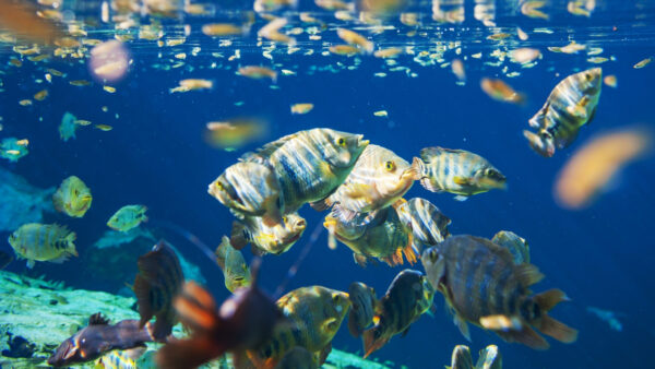 Fish species in Chinese water